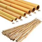 Heavy Duty 4ft 6ft Strong Professional Bamboo Plant Support Garden Canes Thick