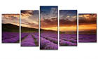 5Pcs Canvas Pull a proof pix Painting Pictures Wall Art Home Decor Provence Lavender Framed