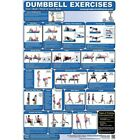 Внешний вид - Productive Fitness Poster Series | Dumbbell Exercises for At Home Use