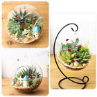 Mini Fish Tank Hanging Glass Ball Aquarium Plant Home Desktop Decor with Stand
