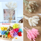 30pcs/bunch Bunny Tails Natural Dried Pampas Grass Reed Flower Home Decoration