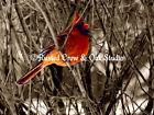 Cardinal Red Bird Winter Rustic Country Home Wall Decor Art Matted Picture A336