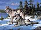 Wolves in the Snow  Stretched Canvas Wall Art Poster Print Wolf Pack Animal dog