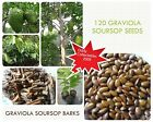 120 GRAVIOLA SOURSOP ANNONA MURICATA SEEDS AND BARKS FROM HOME COLLECTION