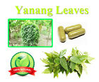 Yanang Capsules Natural Herb High Chlorophyll Antioxidant Anti Aging Supplements