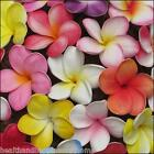 earthessence FRANGIPANI 3% JOJOBA ~ CERTIFIED PURE ESSENTIAL OIL ~ Aromatherapy.
