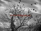 A Storm is Coming Bird Flock B&W Original Signed Handmade Matted Picture A816