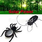 Insect Alive! 7.6cm Solar Powered Spider Bug, 2015 Fun Toy in Garden & Party