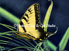 Rustic Yellow Butterfly Green Blue Country Home Decor Print Matted Picture A125