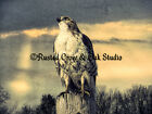 Rustic Blue Cream Hawk Bird Cloud Sky Country Decor Wall Art Matted Picture A214