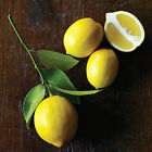 Citrus Fruit Trees 12 - 15 Inches Tall Rooted Cutting Lemon Lime Calamondin +++