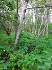 40 ACRES NORTHERN MINNESOTA TREES 15 MILES FROM DULUTH