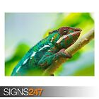 COLORFUL CHAMELEON (3791) Animal Photo Picture Poster Print Art A0 A1 A2 A3 A4