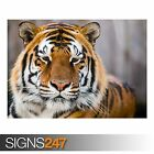 RANTHAMBORE TIGER RESERVE (3794) Animal Photo Poster Print A0 A1 A2 A3 A4