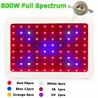 Double Chips 800W LED Grow Light Plants Flower Oganic Growing Full Spectrum