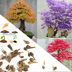 20Pcs/Bag Maple Tree Bonsai Seeds Palmatum Atropurpureum Plant Home Decor