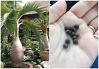 Fresh 50Pcs Bottle palm tree Seeds Exotic Plants Bonsai tree Tropical Ornamental