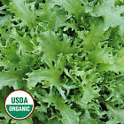 Endive Seeds -Organic Heirloom -Non Gmo Open Pollinated -100 SEEDS