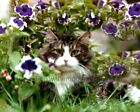 Kitty Cat in The Petunias Flower Garden  Art Print Made in USA