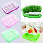 Hydroponics Basket Nursery Tray Bean Seed Seeding Garden Yard Vegetable Pot Tool