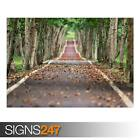 TREE-LINED ROAD (AD984) NATURE POSTER - Photo Picture Poster Print Art A0 to A4