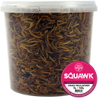 SQUAWK Dried Mealworms - Premium Quality Wild Bird Food Garden Snacks For Birds