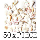 Внешний вид - Mixed Ocean Beach Fairy Garden Assorted Seashell Marine Life for Decorations Art