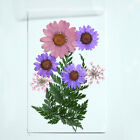 Pressed Flower Mixed Organic Natural Dried Flowers DIY Art Floral Decors Gifts
