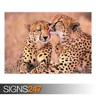 SOUTH AFRICAN CHEETAHS (3432) Animal Poster - Poster Print Art A0 A1 A2 A3 A4