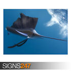 SAILFISH (AE921) - Photo Picture Poster Print Art A0 A1 A2 A3 A4