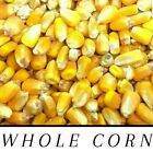 Whole Raw/Re-CLEANED Corn Animal Feed or Arts & Crafts Choose Size RESEALABLE