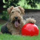 Boomer Red Ball Indestructible Solid Dog Toy Various Size Pet Toys J5T3