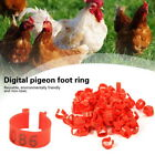 1 to 100 Numbered 8mm 10mm Poultry Leg Bands Bird Pigeon Duck Rings Clip Parrot