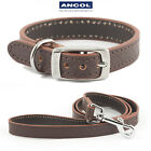 Ancol Heritage Leather Diamond XS 20-26cm Collar Bridle or Matching Lead
