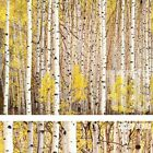 """30W""""x24H"""" ASPEN GROVE, COLORADO by CHRISTOPHER BURKETT - TREES CHOICES of CANVAS"""