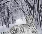 White Tiger Art Poster Print New