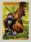 Monkey Park Zoo Orang-Utang Baby with Mother Animal Vintage Poster Repro FREE SH