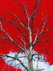 Tree Against Red Sky Matted Picture Home Room Decor Interior Wall Art A225
