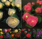 20 Mini Rose Flower BATTERY OPERATED String LED Fairy Lights - 6 Colours NEW