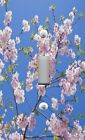 Light Switch Plate & Outlet Covers CHERRY BLOSSOMS AGAINST BLUE SKY CLOSE-UP