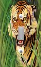 Light Switch Plate & Outlet Covers SNARLING TIGER