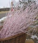 Birch branch pink stems- silver glitter:  Buy 2, get 1 free-Sale ends 2/28