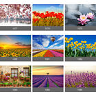 Tulips Pink Blossom Red Poppy Lavender Sun Flowers Wall Mural Photo Wallpaper