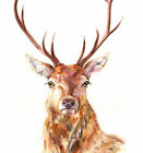 HELEN ROSE Limited Print of my STAG watercolour painting 209