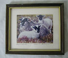 Lovely Little 9 x 7 cm EWE & Lambs Print by David Brown Framed Sheep Painting