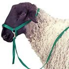 Nylon Sheep Halter with Catch Strap - 5 Colors Available NEW