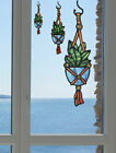 CLR:WND Hanging Plant Succulent D1 -See-Through Vinyl Window Decal ©YYDC (SIZES)
