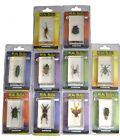 DeAgostini Encased REAL BUG Collector Insect Beetle Spider Cockroach Science