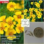 MEXICAN TARRAGON SEEDS (Tagetes lucida); Culinary herb