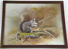 Squirrel by Jack Nance Wall Art Print Picture Gold Framed Under Glass
